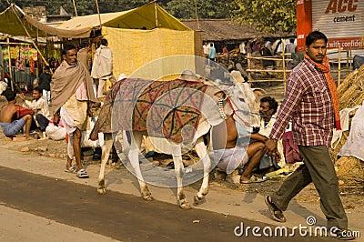 Indian Livestock Fair Editorial Image