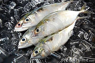 Indian Mackeral Fish