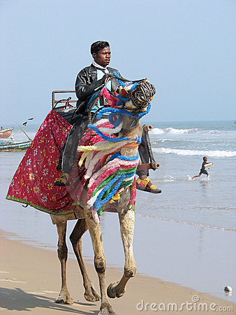 Indian man and camel Editorial Photo