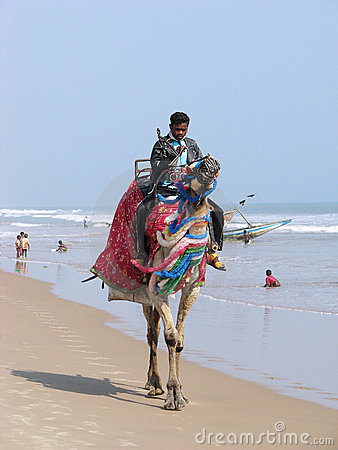 Indian man and camel Editorial Photography