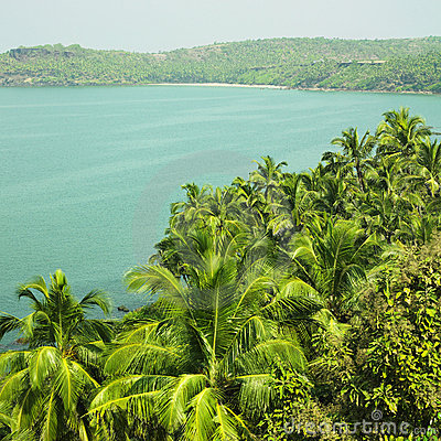 Indian Ocean and coconut palms
