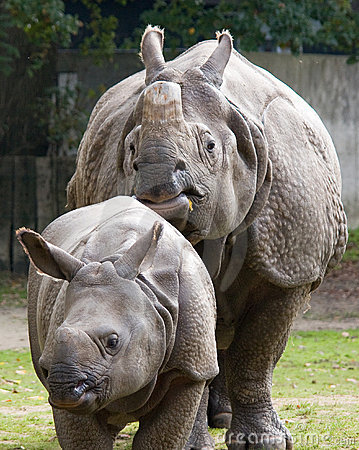 Free Indian Rhinoceros With Calf Royalty Free Stock Image - 7035426