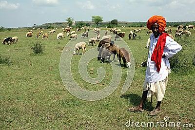 Indian Shepherd Editorial Image