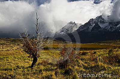 Indian summer. Torres del Paine. Chile