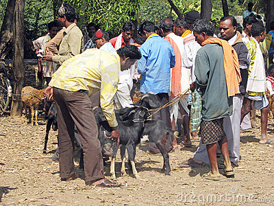 Indian tribal weekly goats market Editorial Image