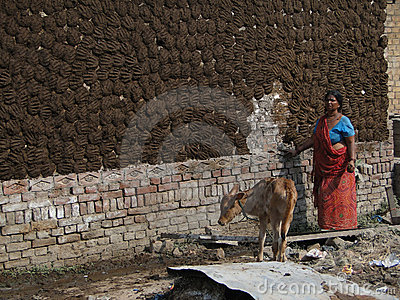 Indian woman puts cow dung cake patties on wall Editorial Stock Image