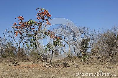 Indian woodland
