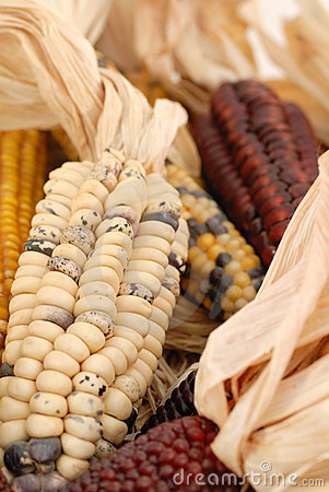 Indianm corn