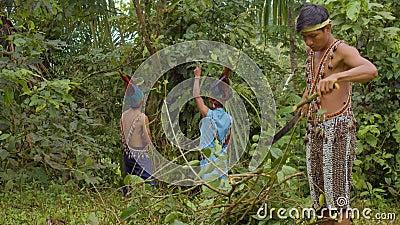 Indigene, männliche Schneide ayahuasca Zweige im Amazonasregenwald stock video