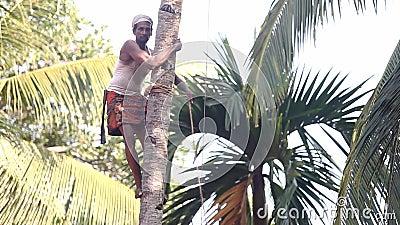 Indische Arbeitskraft mit dem Schnurrbart repariert Stockunterstützung auf Palme stock video footage