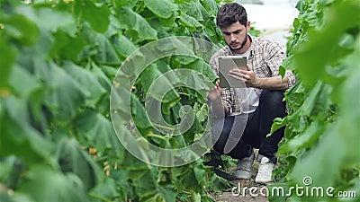 Individuo que se sienta entre las filas verdes de la tableta almacen de video