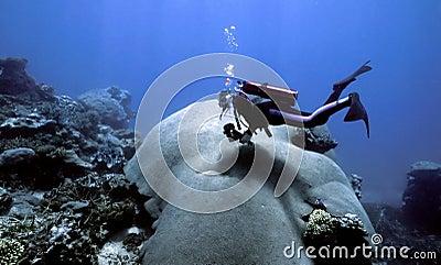 Indo Pacific Coral