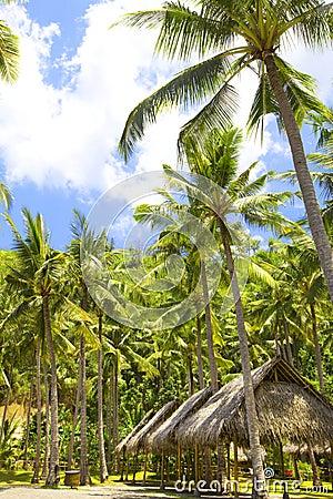 Indonesia. Bali. Hut under palm trees