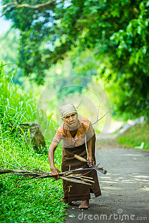 Free Indonesian Old Woman Looking For Dried Wood For Cooking Stock Photos - 51566893