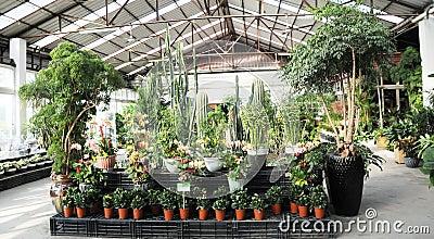 Indoor conservatory garden