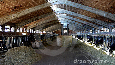 Indoor dairy farm
