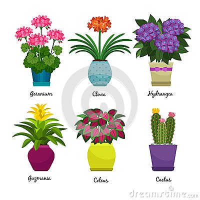 Free Indoor Garden Plants And Flowers Royalty Free Stock Images - 99336269