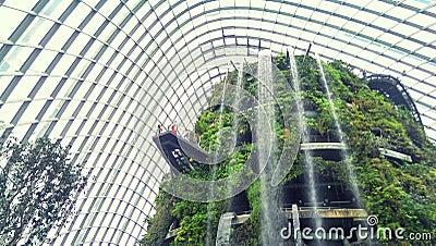 Indoor garden and waterfall