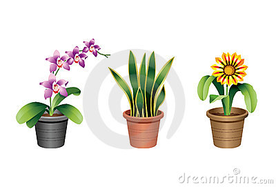 Indoor home and office plants
