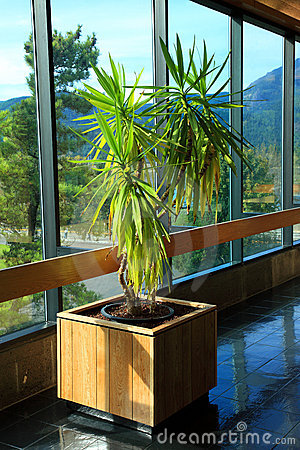 Free Indoor Plant At Bonneville, Oregon. Royalty Free Stock Image - 16551026