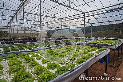 Indoor Vegetable Garden Stock Photo Image 49938372