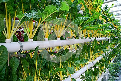 Industrial greenhouse for growing beet
