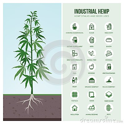 Free Industrial Hemp Uses And Products Royalty Free Stock Image - 114332996