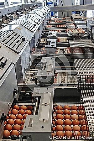 Egg packaging lines 2