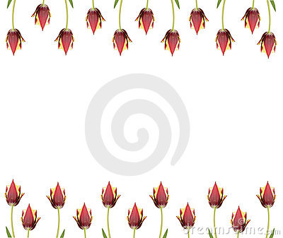 Ine of  tulips for borders, frames etc