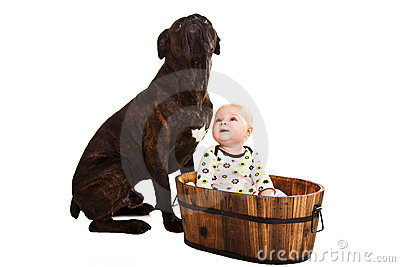 Infant baby with dog
