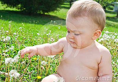 Infant playing with dandelions