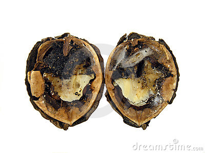 Infected walnut