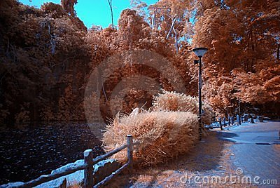 Infrared photo – tree and lake
