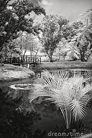Infrared photo on a pond