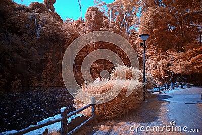 Infrared photo – tree and lake