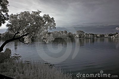 Infrared photo – tree, landscapes and lake
