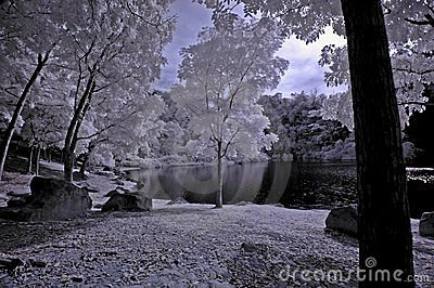 Infrared photo- tree,rock,girl