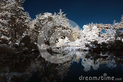 Infrared Pond with Trees