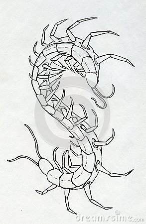 Ink drawn centipede