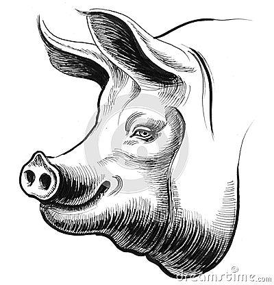 Smiling pig Cartoon Illustration