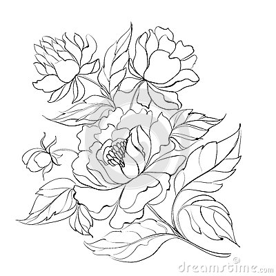 Ink Painting Of Peony Royalty Free Stock Photo Image