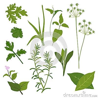 Inkasowy ziele