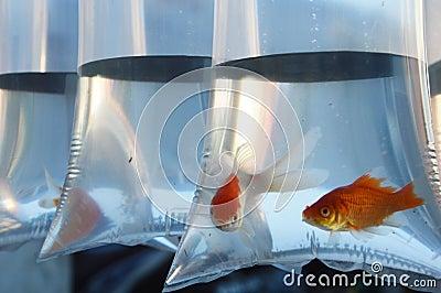 Inlaid fish