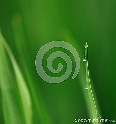Inner peace/ Green Life