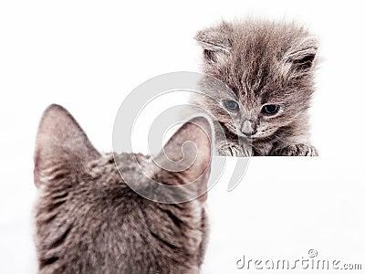 Innocent kitty