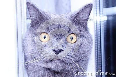 An inquisitive cat
