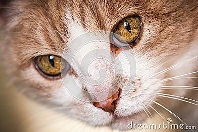 Inquisitive cat face