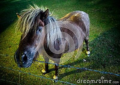 Inquisitve horse in the evening