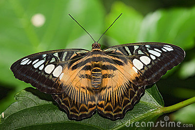 Insect 006 butterfly