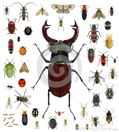 Free Insect Collection Stock Photo - 73682320
